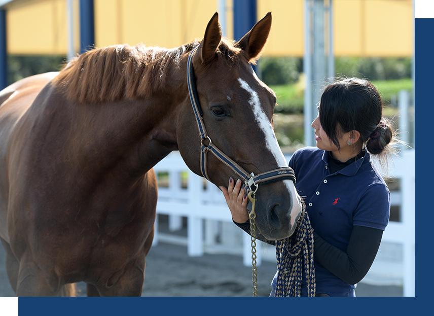馬を世話するスタッフ