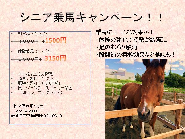 シニア乗馬キャンペーン!!