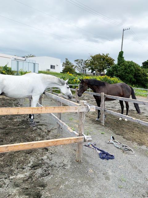 馬と馬がにらめっこ