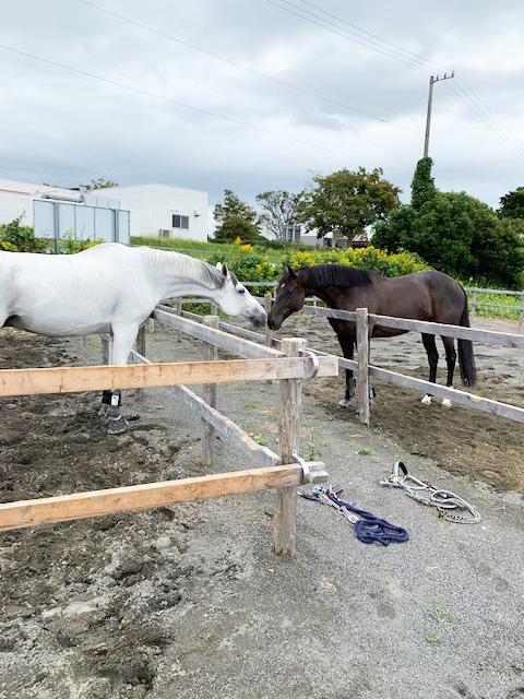 馬と馬がキス