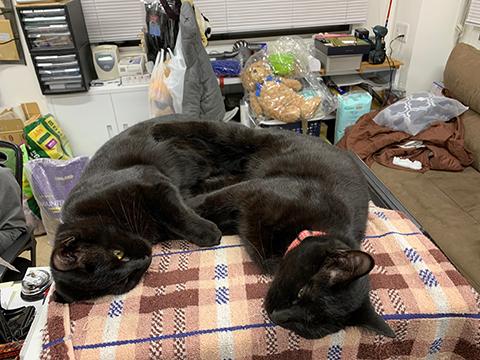 仲良し黒猫兄弟