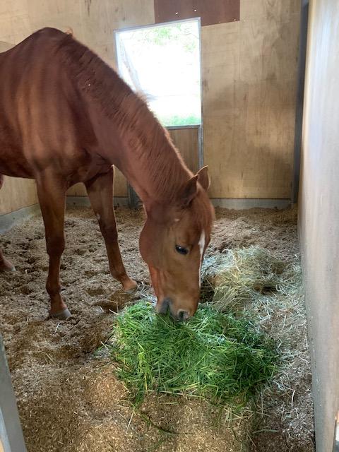 青草を食べる馬